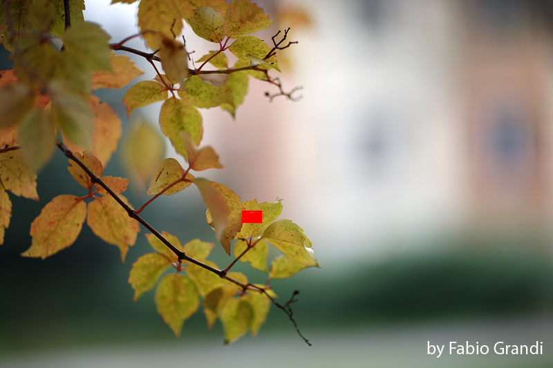foglie-in-primo-piano